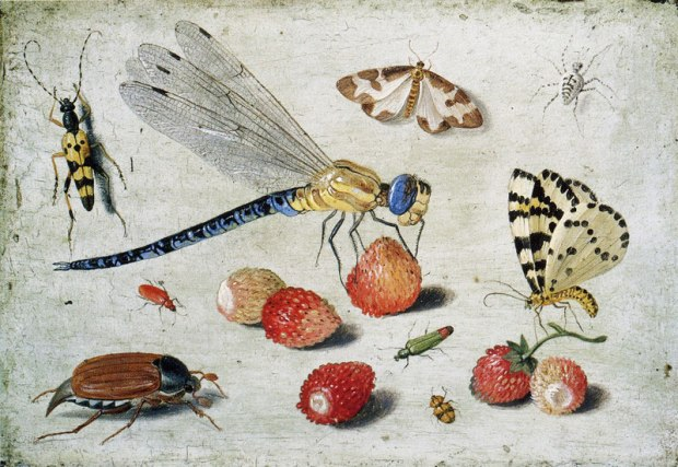jan_van_kessel_insects